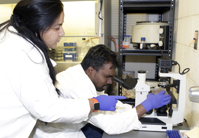 Surbhi Sharma, left, Ph.D. candidate and Dr. Ronald Benjamin Babu, postdoctoral researcher at UNLV, work at UNLV's School of Life Science lab on Friday, May 27, 2016. Bizuayehu Tesfaye/Southern Ne ...