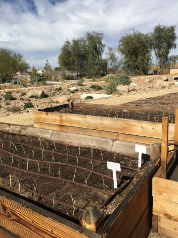The Nevada Cooperative Extension Test and  Demonstration Gardens are open to the public. (Courtesy)