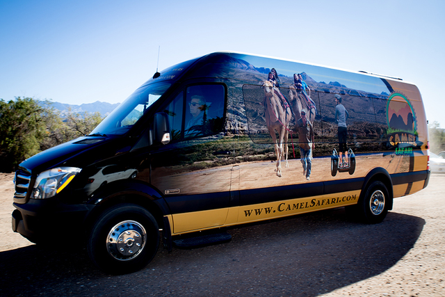 TONYA HARVEY/LAS VEGAS BUSINESS PRESS Camel Safari will transport guests to the 176-acre Bunkerville attraction in Mercedes-Benz Sprinter vans like this one.