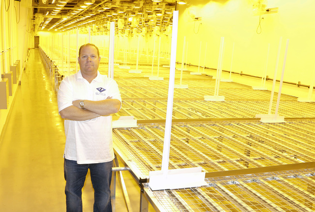 Nathan Schweigart, contractor for marijuana grow house, poses for a photo inside Flower Room at Green Mart cultivation facility Friday, Oct. 21, 2016, in Las Vegas. Bizuayehu Tesfaye/Las Vegas Rev ...