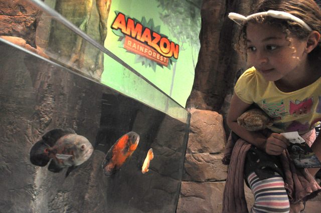 A SeaQuest Interactive Aquarium guest observes Oscars, which are part of the facility's Amazon habitat. Photo by Buford Davis | Business Press