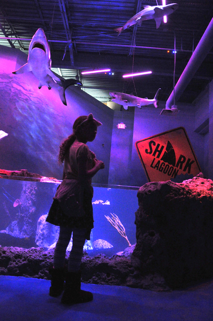 SeaQuest Interactive Aquarium, which opened at The Boulevard in December, is an example of malls being re-imagined as entertainment venues. Photo by Buford Davis | Business Press