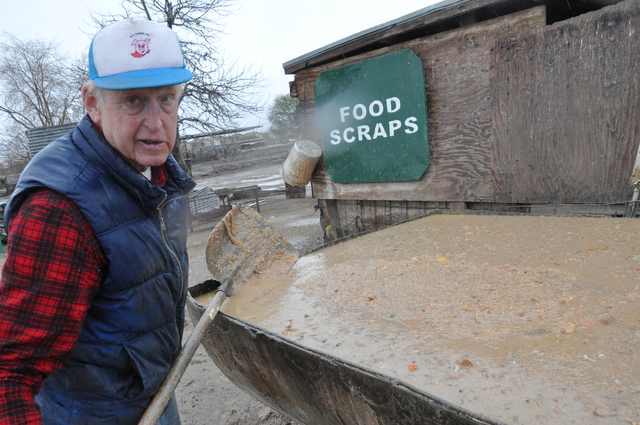 Food scraps from local casinos have been recycled since the 1960s to feed the pigs of R.C. Farms (owner Bob Combs, above). Photo by Buford Davis | Business Press