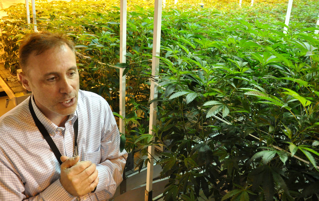 Buford Davis / Las Vegas Business Press Paul Schloss, president of Redwood, explains features of the 20,000 square-foot marijuana cultivation facility in southern Las Vegas.