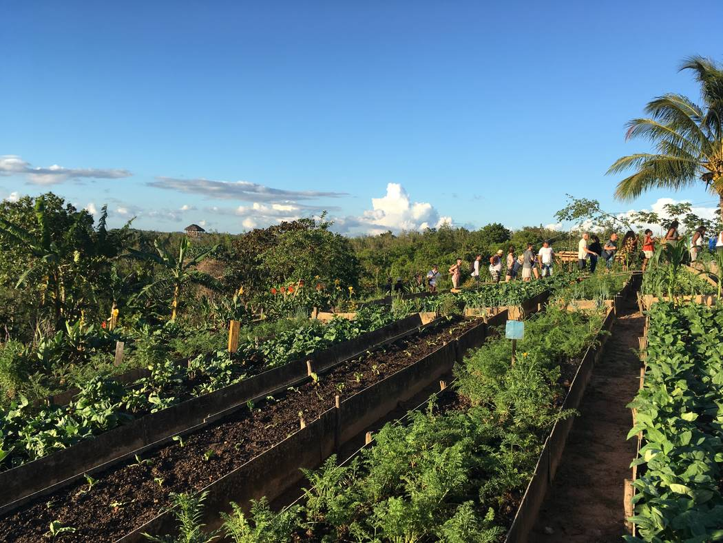 Students visit an organic farm in Vinales. (Anthony Guttman/UNLV student)
