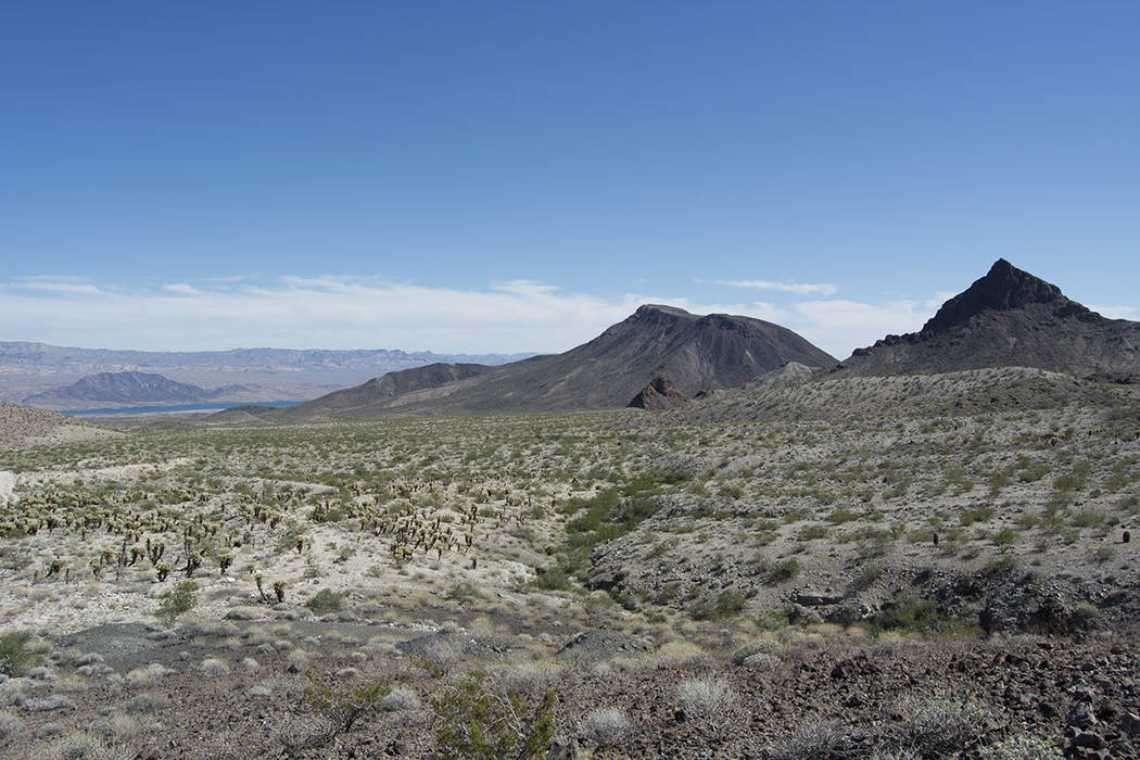 This 20-acre site is north of the Cottonwood Cove Resort and Marina southeast of Las Vegas. (Tom Love Group)