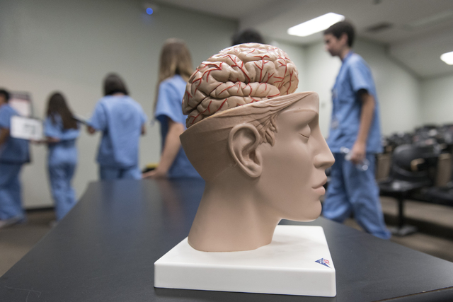 A model brain sits on a table as CampMed students exit a classroom following a neurology lesson at UNLV on July 22, 2016. The program is designed to simulate medical career opportunities for stude ...
