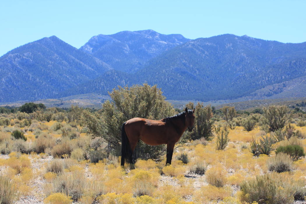 The area has wild horses. (Mt. Charleston Realty Inc.)