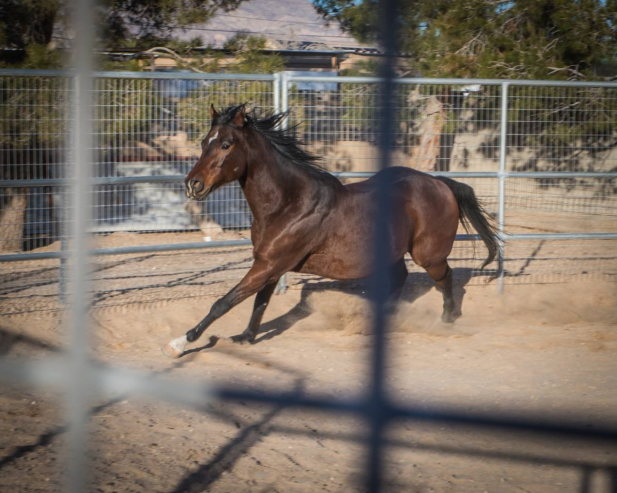 The session, inspired by the renowned American horse trainer Monty Roberts, is developed to bui ...