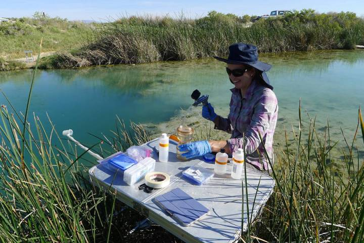 Director of the Great Basin Center for Geothermal Energy Director Bridget Ayling samples water ...