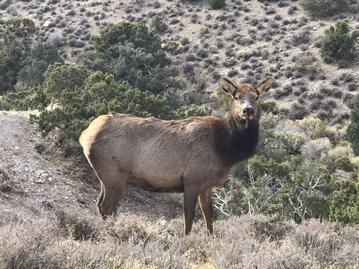 The property's creek attracts local wildlife including elk, wild mustangs, deer, owls and hawks ...
